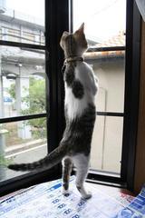 出窓から外が見える。シマ