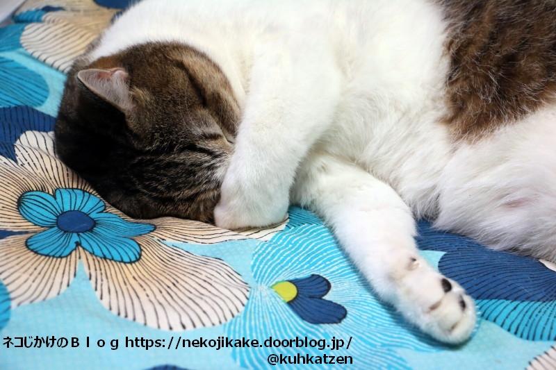 2020093006寝る猫を見て幸せな気分になる。2