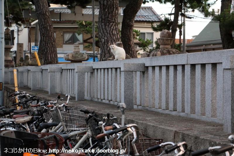 2015062805自転車の有効活用。1