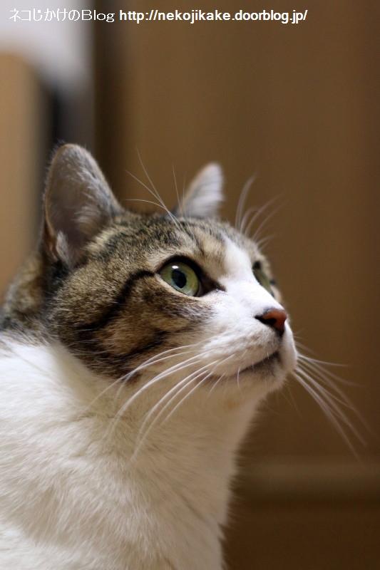 2017021401猫が見るもの。