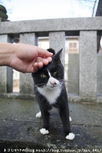 ネコ関係。その1 ごっち