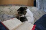 ただいま勉強中。シマ1