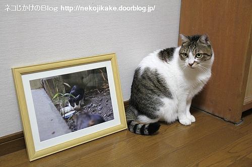 町猫2011@ギャラリーマゴット 作品5