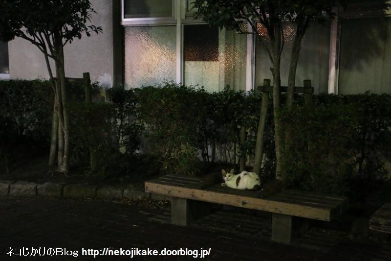 2018082404夜のベンチに猫。