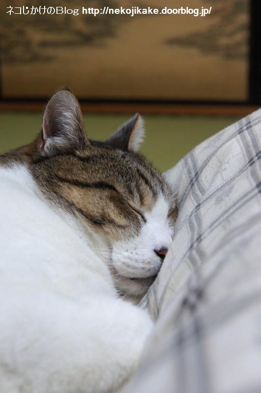 2017051306至高の睡眠。