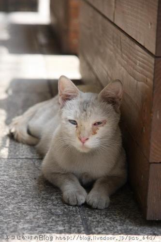 白と黒。その1 白ネコ