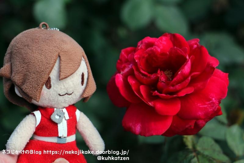 2021052910真っ赤なバラをあなたにあげる。