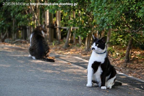2016052214猫だってカラスだって。2