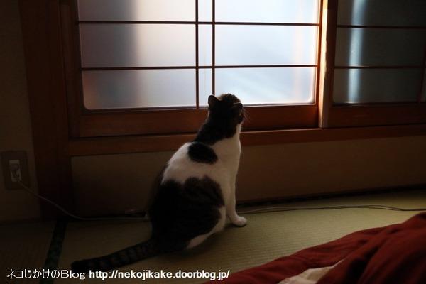 2017010601猫は外を目指す。1