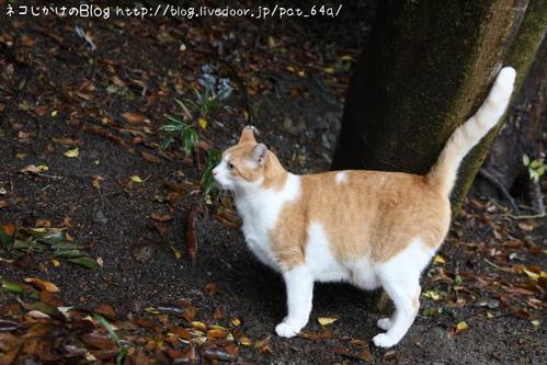 雨降りネコさん。その1 ペロ