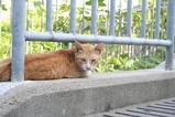 昔の子ネコと今の子ネコ。昔の子ネコ