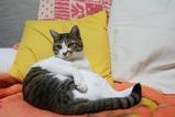 このソファーはボクたちのものだ。シマ