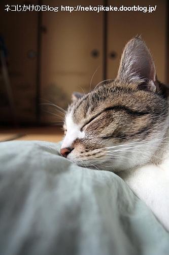 寝ているのが幸せか。