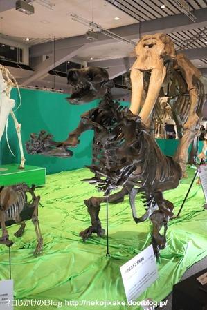 2017073010メガ恐竜展201@ 大阪南港ATCホール。8
