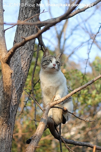 猫もおだてりゃ木に登る?