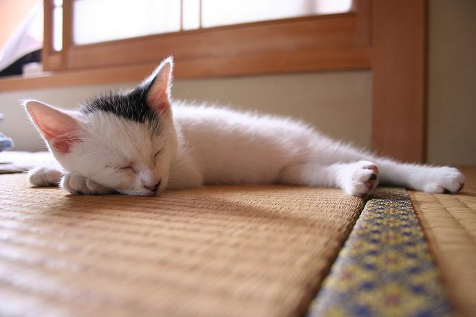 あち〜、だり〜。寝よっ! クロ
