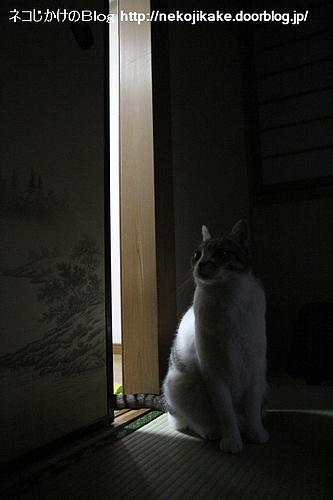 扉が開かれた日。