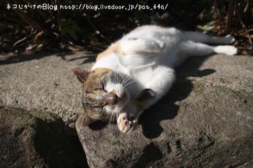 寝転ぶネコ。その3 さいちゃん