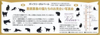 里親募集の猫たちのお見合い写真会01s