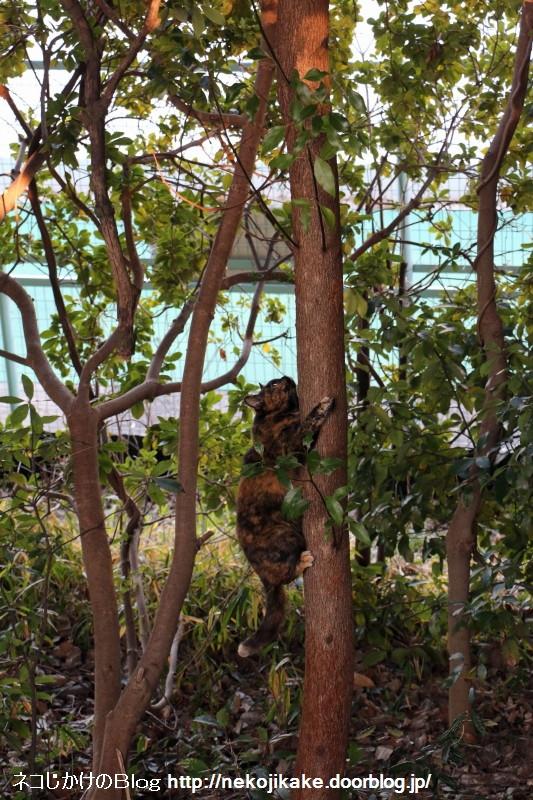 2016021110木登り猫。