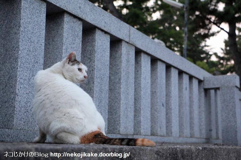 2015061509フォトジェニックな猫たち。4