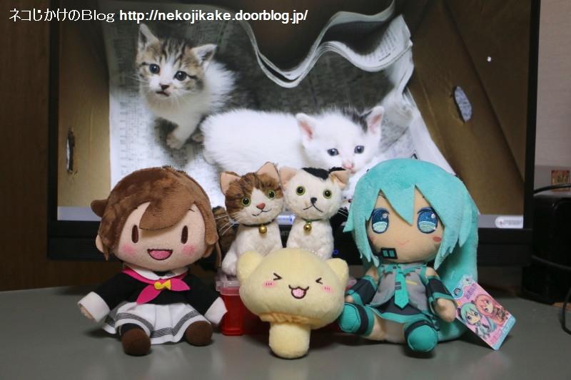 2018032004シマちゃん、クロちゃん誕生日おめでとう!2