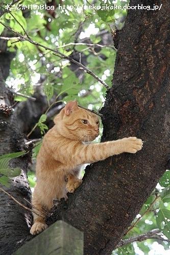 爪とぎの木。