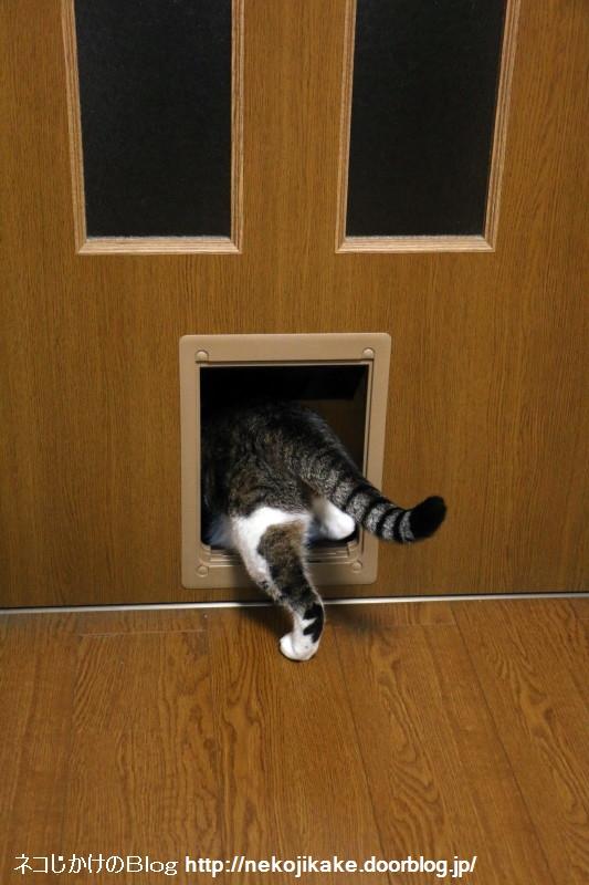 2015071001どんなドアもおしりがつっかえない。1