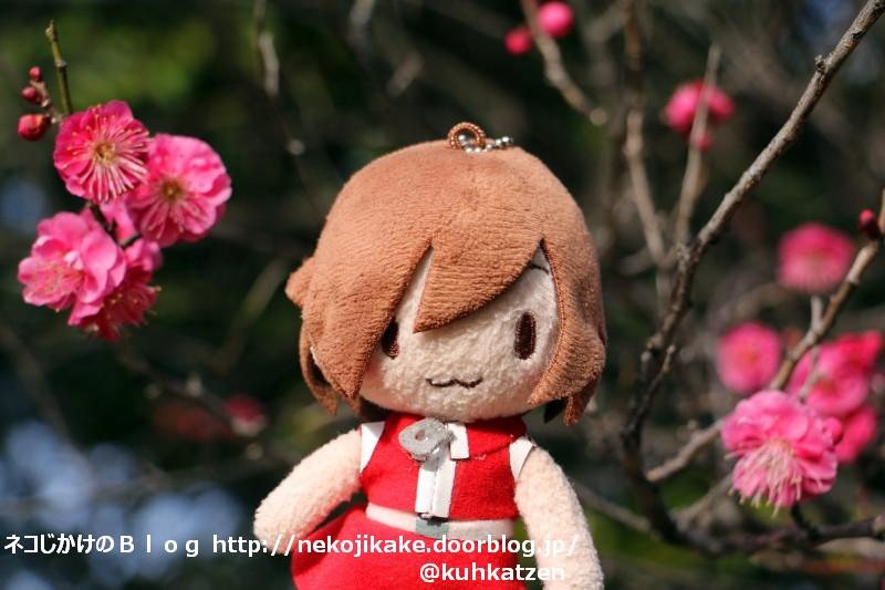 2020012607梅の花が咲いてた。