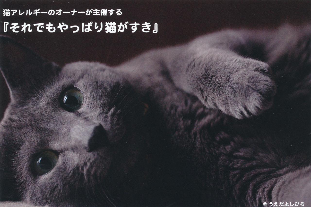 それでもやっぱりネコがすきDM1