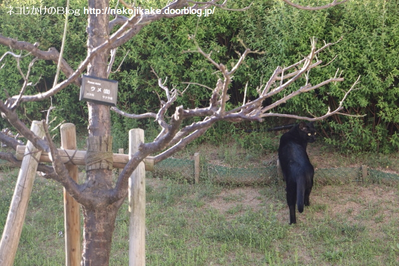 2019042012黒い猫。1