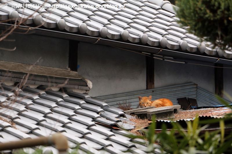 2019022209屋根に隠れて。