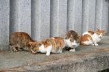 外のネコたち。その1
