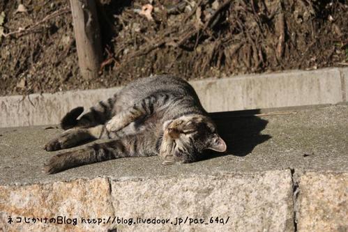 寝転ぶネコ。その2 キジトラボス
