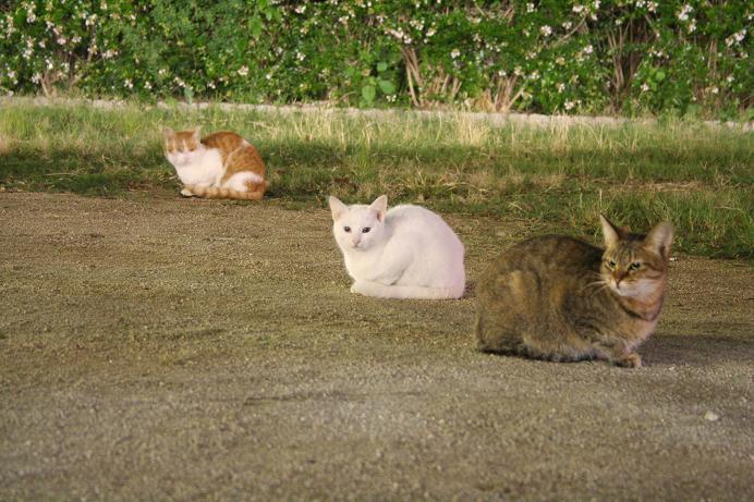夜のネコたち。