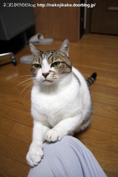 2013112701もみもみじゃない!