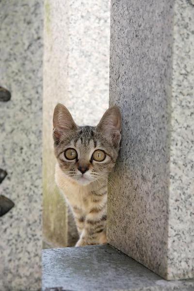 がんばれ!その1 キジトラ子ネコ