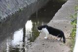 若き白黒ネコの悩み。その1