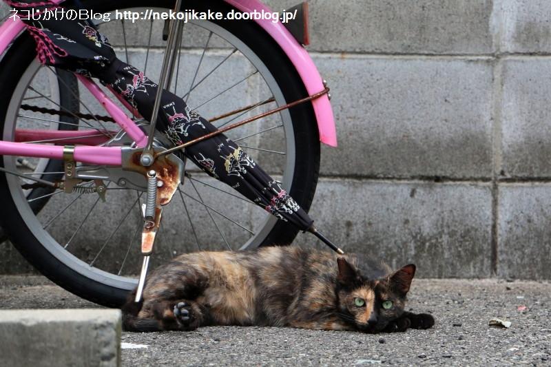 2015081005外猫はココにいる。1