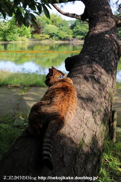 2016060914寝転んでナンボの猫の世界。6
