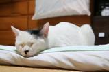 寝るねるネル。クロ