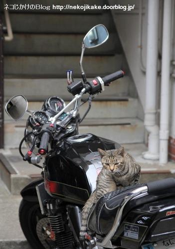 2013082602ネコさんの言うことにゃ。