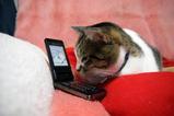 今度は携帯を使いこなすよ。シマ1