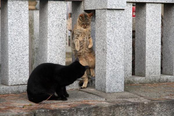 ちょっと通りますよ。その2 くーちゃん キジトラ子ネコ