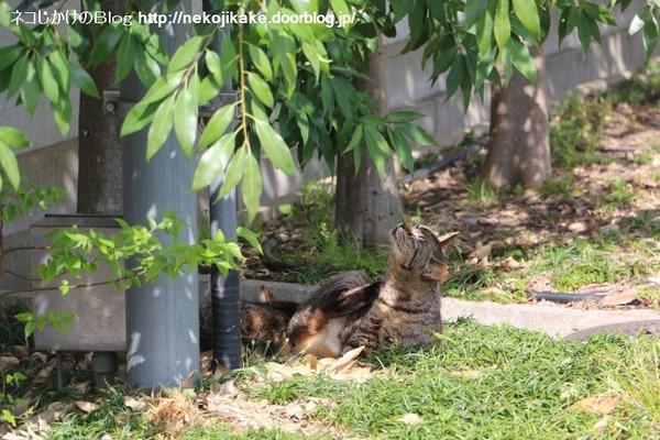 2016041506起きる猫、寝てる猫。1