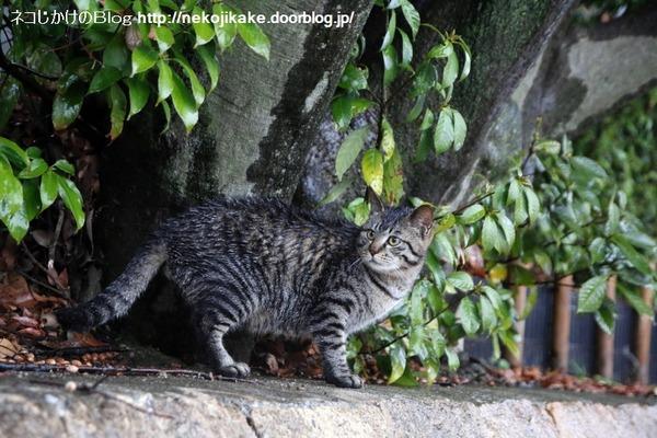 2015030703雨の日のネコたち2。