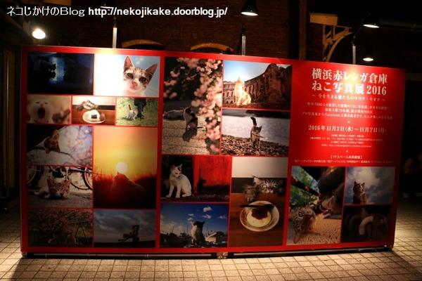 2016110526横浜赤レンガ倉庫ねこ写真展2016 に行ってきました。1