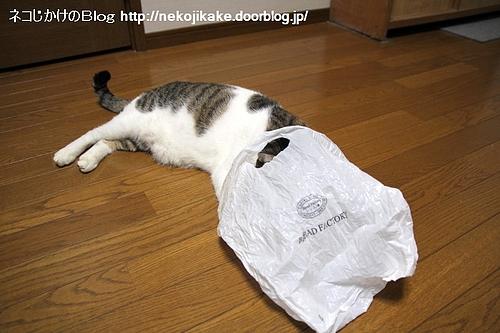 袋があれば入りたい。