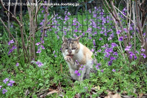 2014032903紫の花に囲まれて。