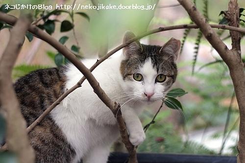 ある日、森の中、猫さんに出会った。